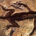 FossilePermiano
