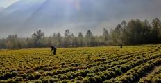 saliet_azienda_agricola_claut_dolomiti_unesco