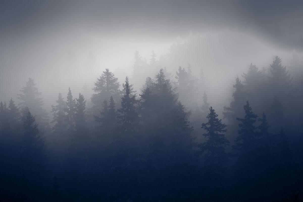 alberi_dolomiti_unesco