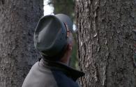 foresta-paneveggio-dolomiti-unesco