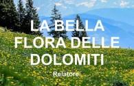 flora-dolomiti-lasen